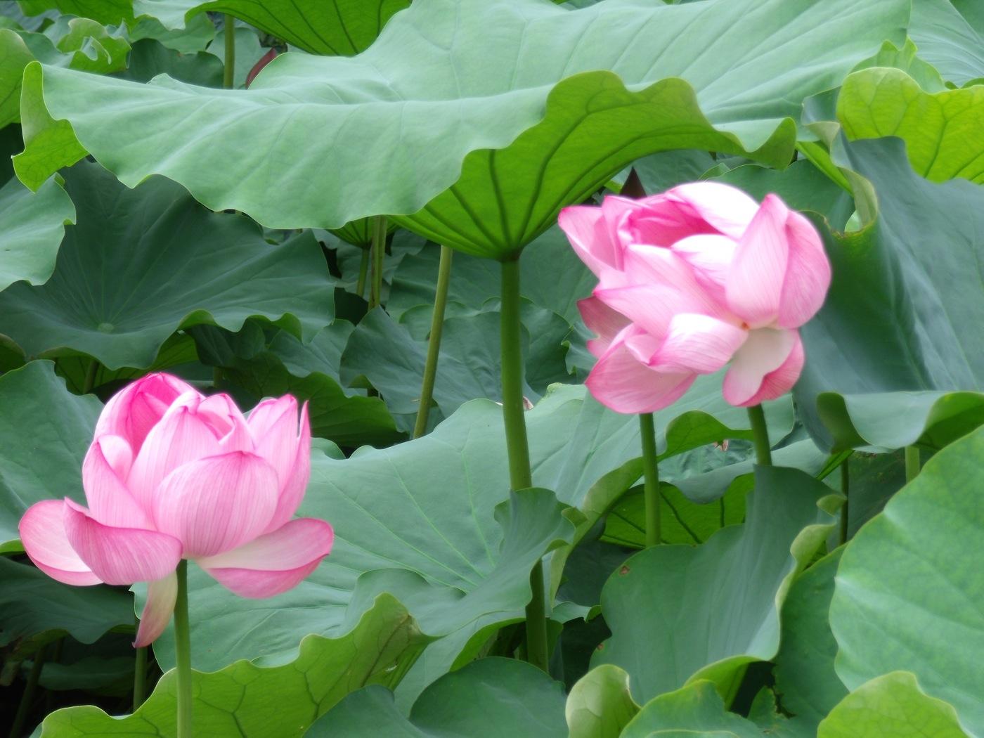 tokyo-fleur