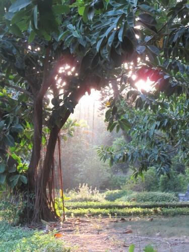 fujian-arbre