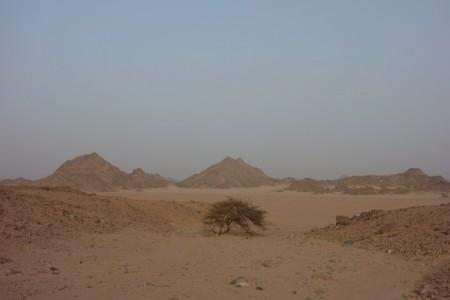 Désert Arabique, Egypte