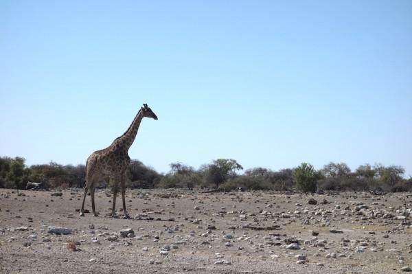 namibie13