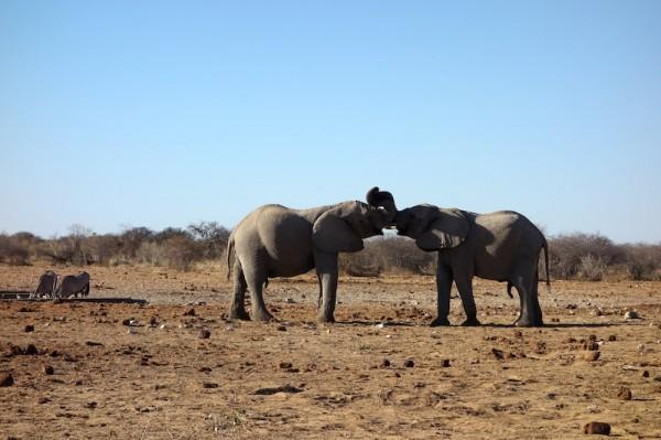namibie22