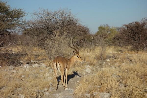 namibie27