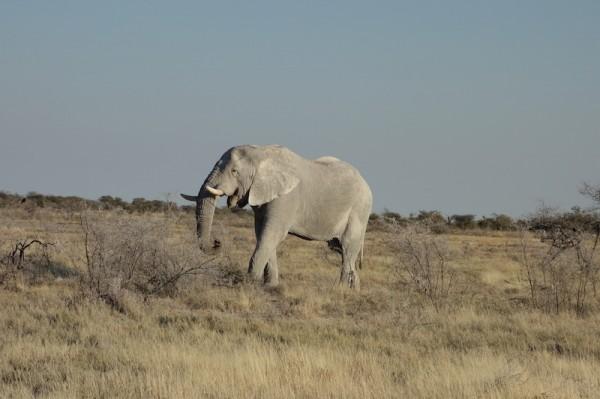 namibie31-elephant