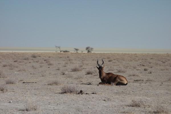 namibie33-koudou