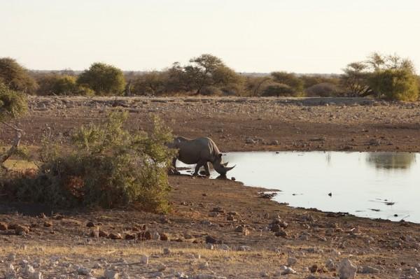 namibie35rhinoceros