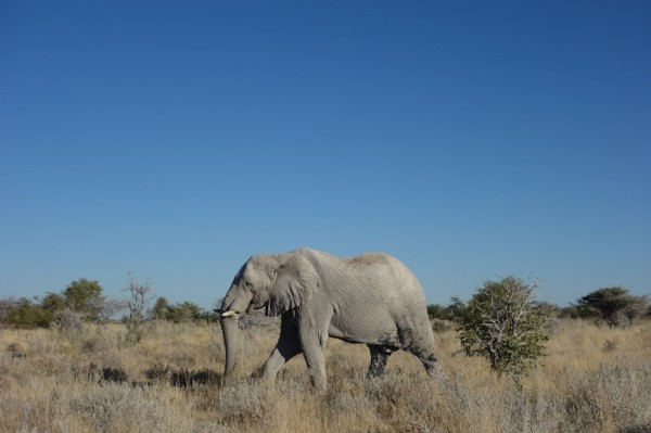 namibie44elephant