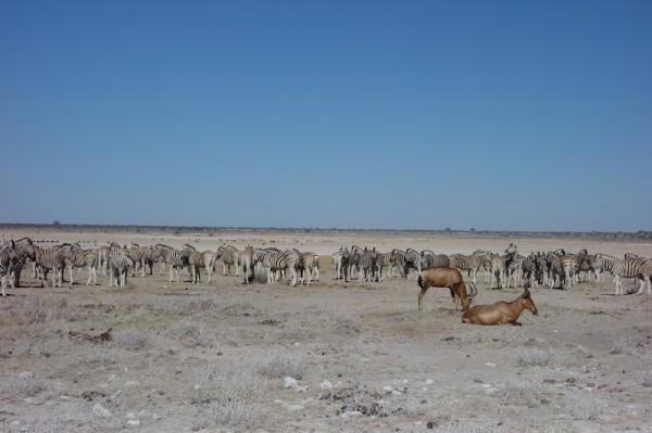 namibie47