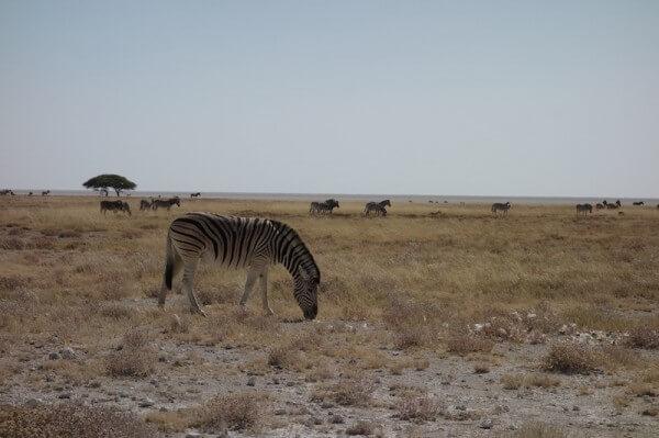 namibie56