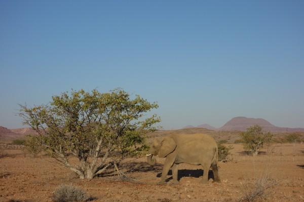 namibie-elephant-desert