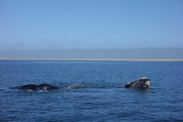 namibie132-safari-maritime