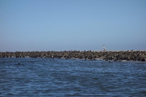 namibie134-safari-maritime