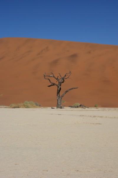 namibie167-desert-namib