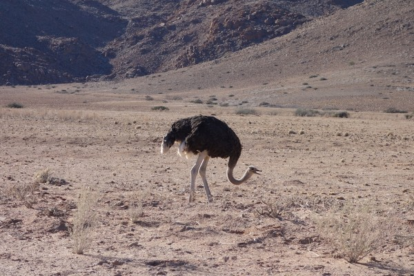 namibie172-desert