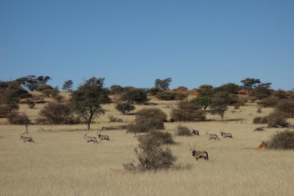 namibie176-desert