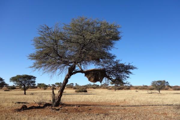 namibie177-desert