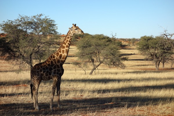 namibie178-desert
