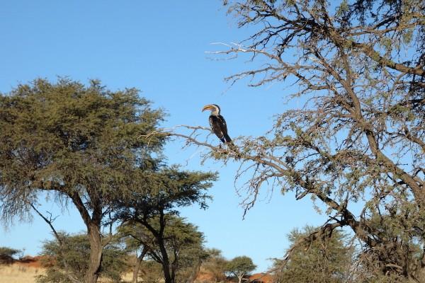 namibie179-desert
