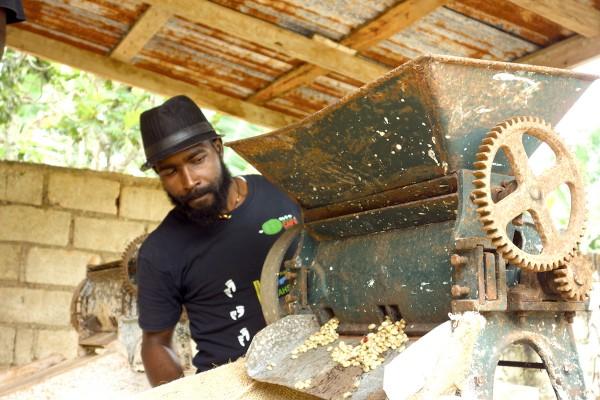 La route du caf en ha ti for Acheter une maison en haiti